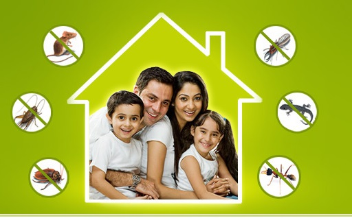 Best Pest Control for Bed bugs in Pune